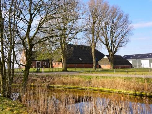 netherlands landscape trees pond