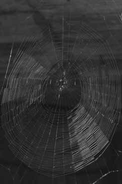 network cobweb threads