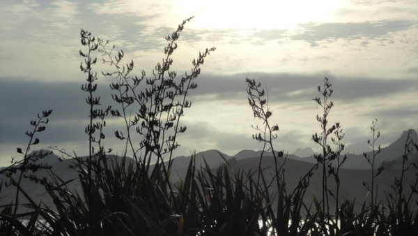 new zealand graeser landscape
