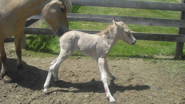 newborn filly horse
