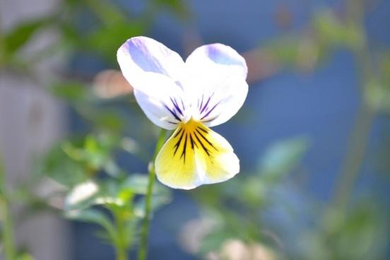 nice flower