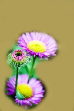 nice flower postcard