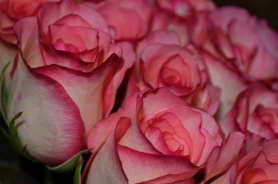 nice flowers