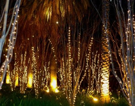 night trees 1