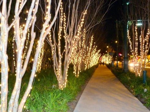 night trees 2