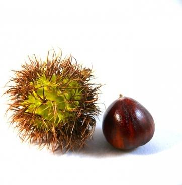 nut food autumn