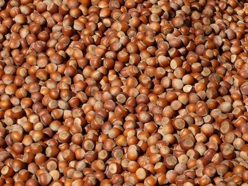 nut nuts hazelnuts