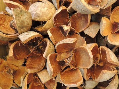 nut open dried