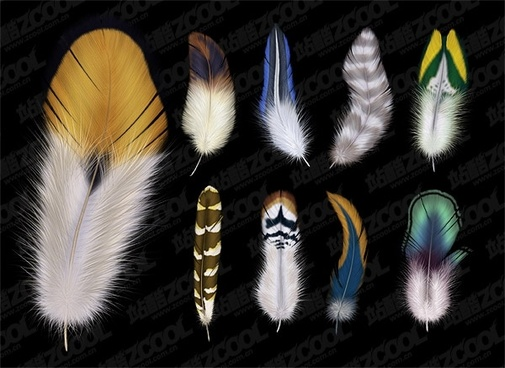 of 9 beautiful feathers psd