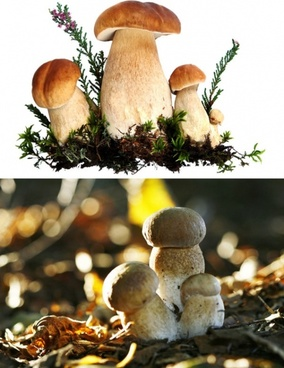 of mushrooms hd photo 1