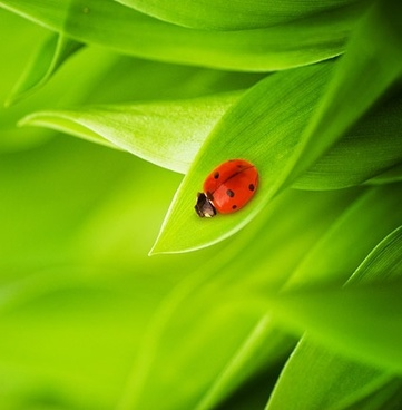 of plants with ladybug picture 7