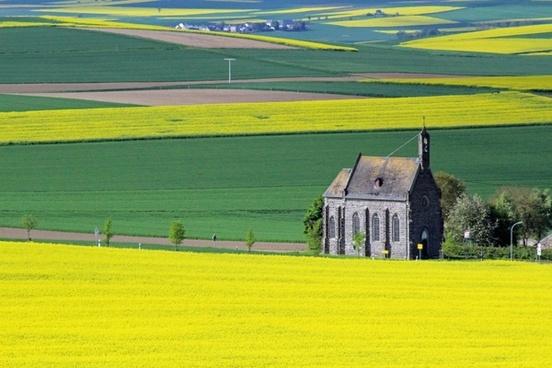 oilseed rape yellow landscape