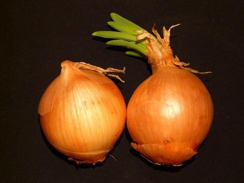 onion vegetables sharp