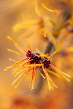 orange blooming bush