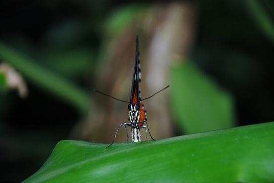orange butterfly bug