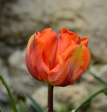 orange feu