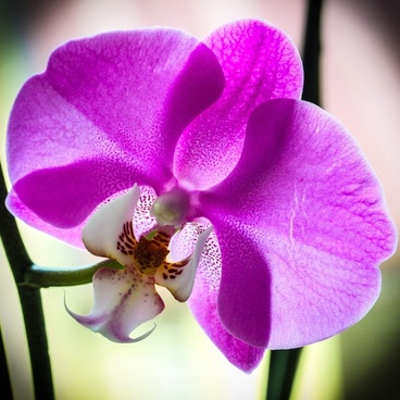 orchid macro violet