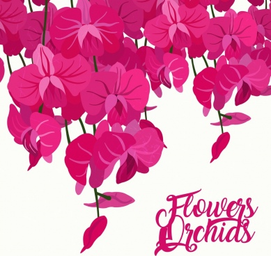 orchids background pink icons decoration