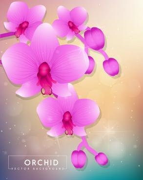 orchids background sparkling violet decoration