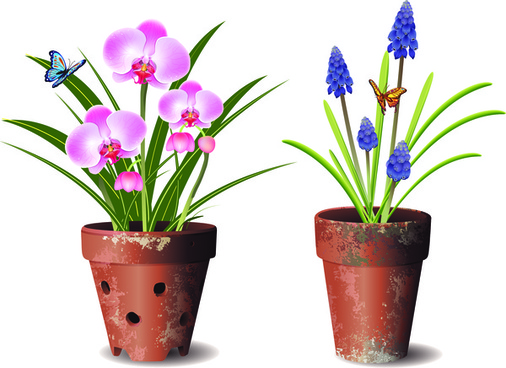 orchids flower pot