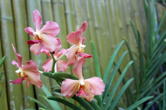 orchids in my backyard