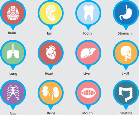 organ vector design with round icons illustration