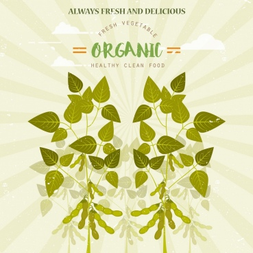 organic food advertisement green soybean icon