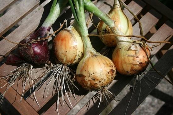 organic onions vegetable