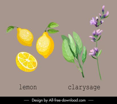organic plants icons colored fruit leaf flower sketch