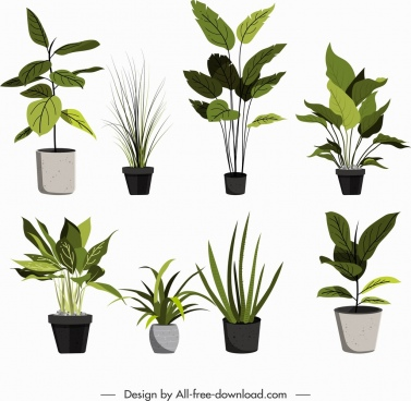 ornamental plants icons pot leaves decor