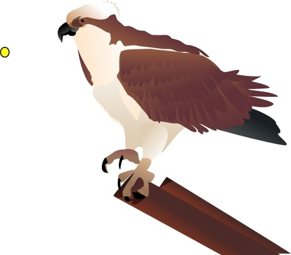 Osprey Standing On Branch clip art