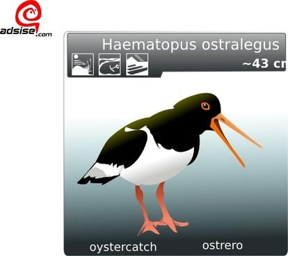 Ostrero Oyster Catcher clip art