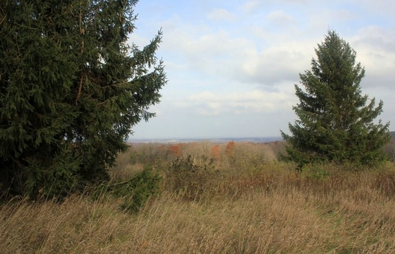 overlook behind trees in blue mound state park wisconsin