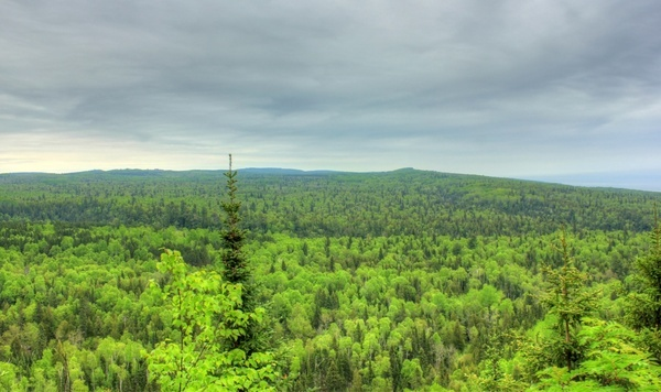 overview of the forest landscape at cascade river state park minnesota