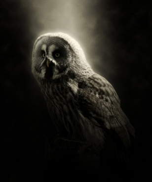 closeup of wild owl in darkness