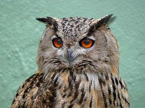 owl picture free stock photos in image format jpg size 2660x1773