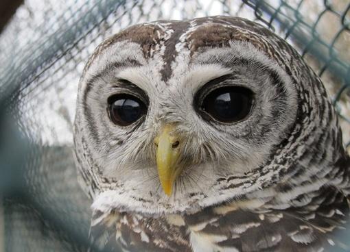 owl eyes pets