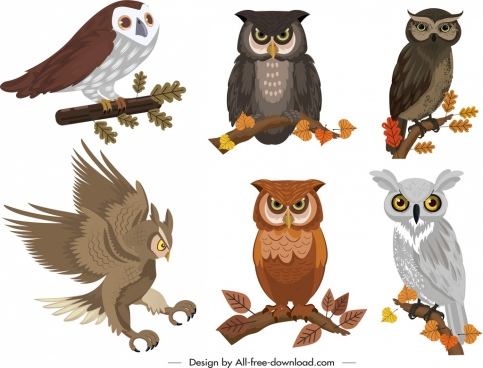 owl icons collection colored cartoon design