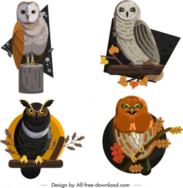 owl wild animals icons colored cartoon sketch