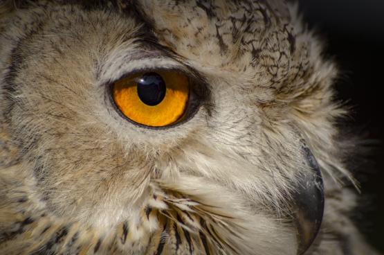 closeup of owls bright eye