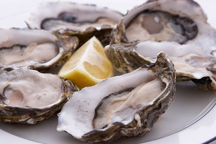 oysters picture