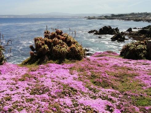 pacific grove california sea