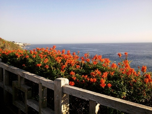 pacific ocean from california usa