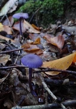 paint fungus