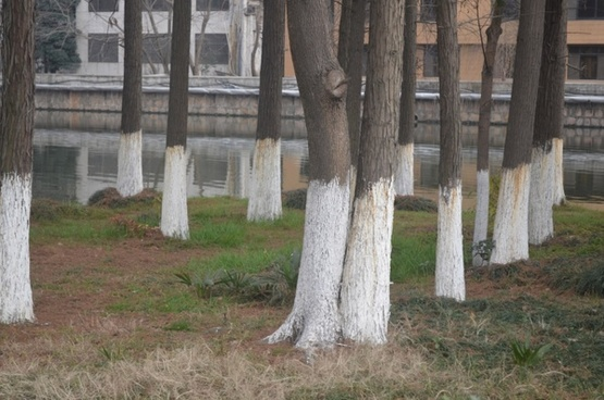 painted tree trunks
