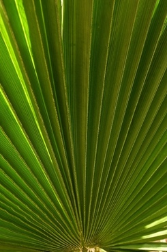palm leaf tree