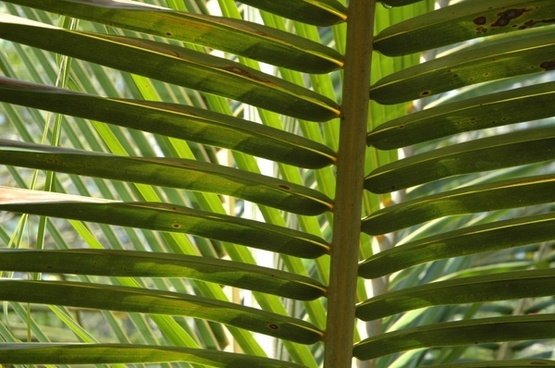palm palm fronds jungle