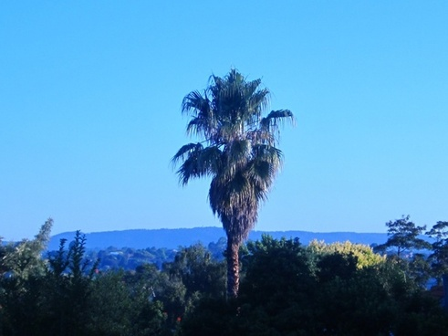 palm tree and blue skies