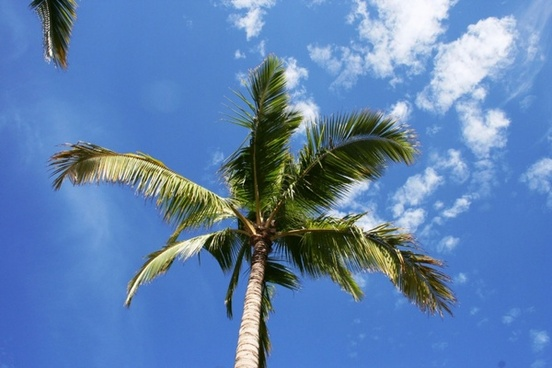palm tree and clouds