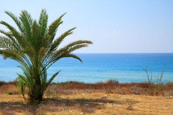 palm tree and sea